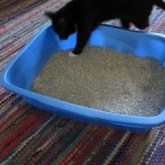 Therapy Thursday: My litter box is dirty and my staff won't clean it