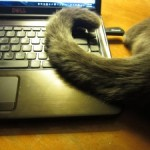 It is hard to type when you are a cat