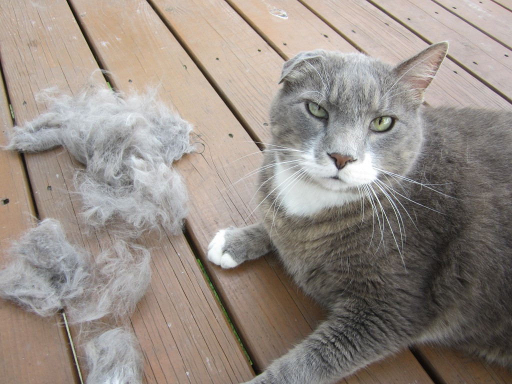 cat hairball impaction symptoms in dogs