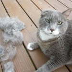 Please brush your cats, barfing up hairballs is not fun.