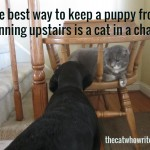 The best way to keep a puppy from running upstairs is a cat in a chair