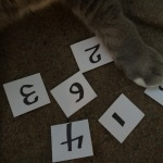 Cats have a hard time picking a winner