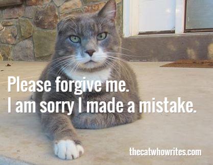 cat mistake