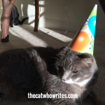 Cats love birthday parties if they can wear a party hat