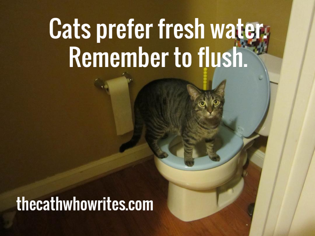 Cats prefer fresh water.