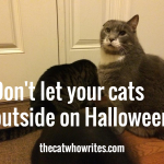 Don't let your cats outside on Halloween