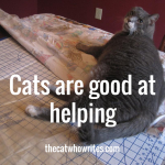 Cats are good at helping