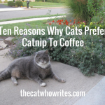 Ten Reasons Why Cats Prefer Catnip to Coffee