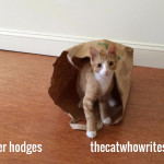 Kittens like to play with paper bags. Would you like me to send you a paper bag?