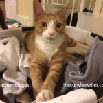 Cats are in charge of the household laundry