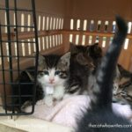 We have seven foster kittens – I am an Aunt now