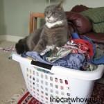 I like warm napkins in my sleeping basket