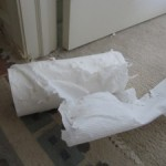 """Who Shredded the Paper Towel Roll?"" by Pooh Hodges"