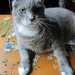 Advice for cats: The best place to rest is on a puzzle