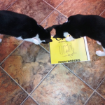 "Tucker and Cruz, two cool cats, review my book, ""CATS are better than DOGS."""