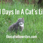 31 Days In A Cat's Life