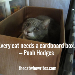 Every cat needs a cardboard box