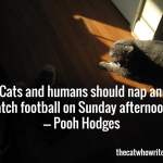 Cats and humans should nap and watch football on Sunday afternoon