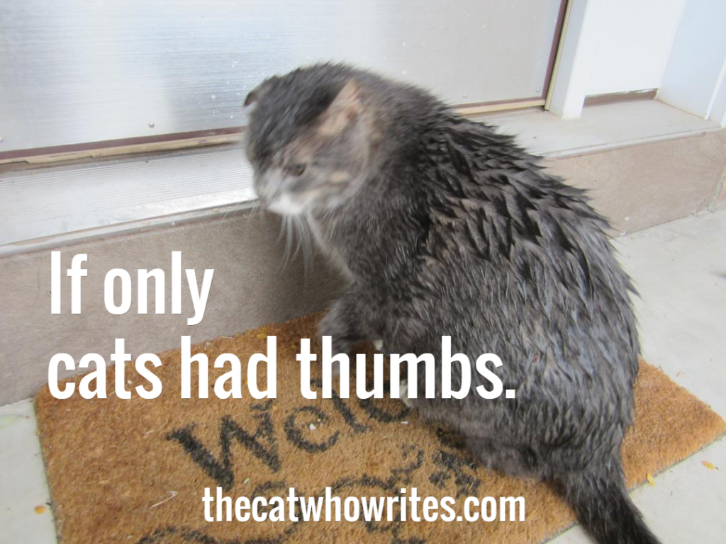 If only cats had thumbs