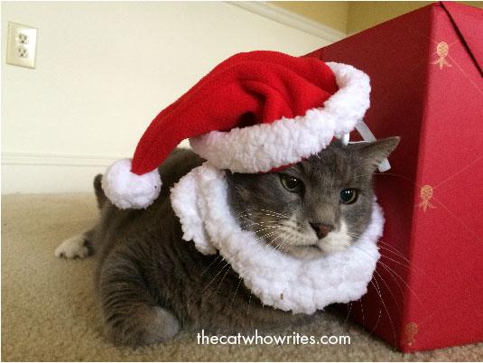 A cat wearing a Santa Hat