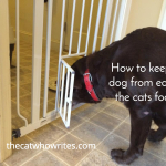 6 Ways to keep a dog from eating the cats food. I like the last reason.