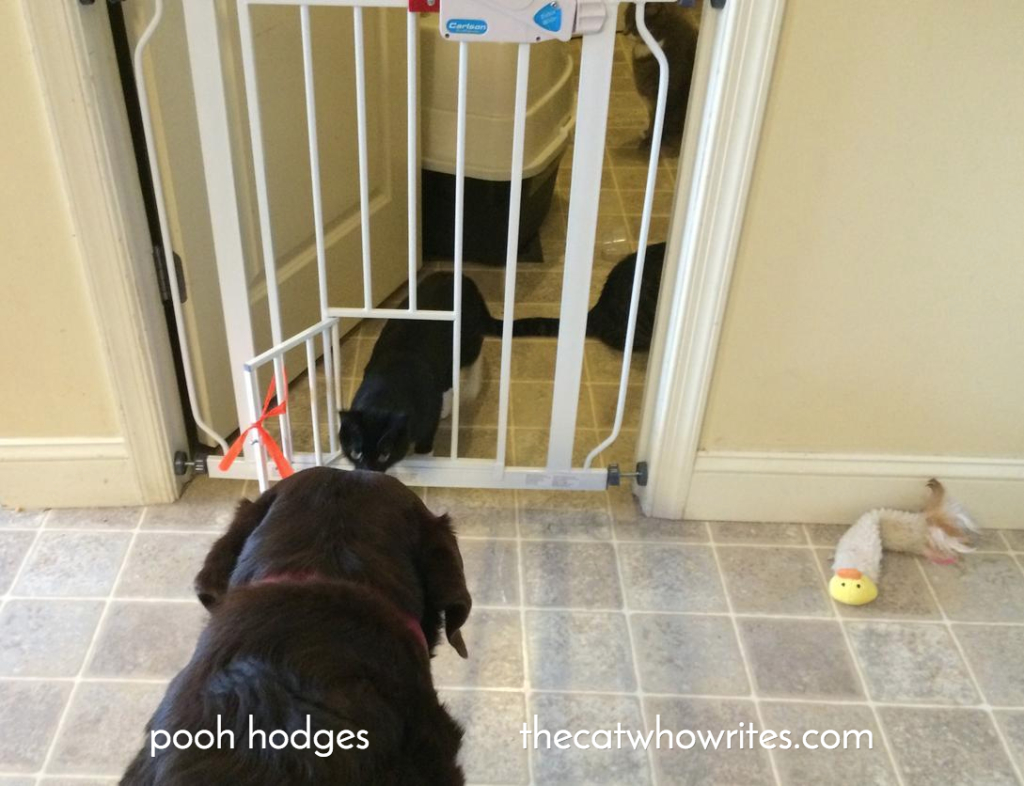 How to keep a dog from eating the cats food