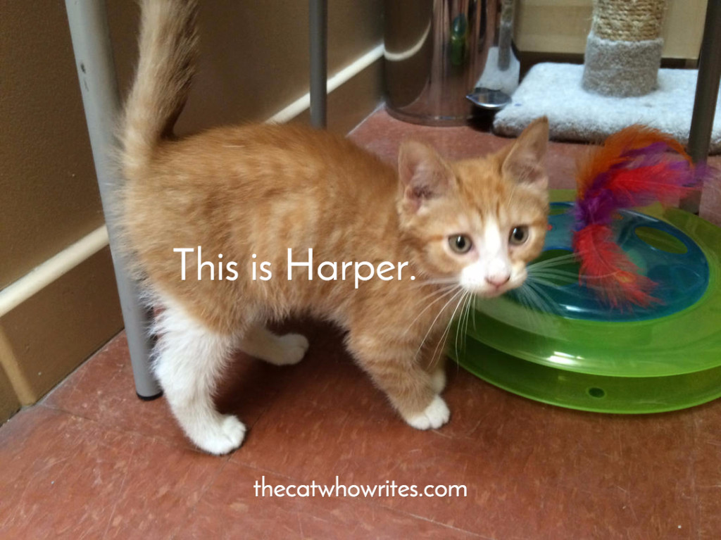 The day we met Harper at the Humane Society of Berks County, Pennsylvania