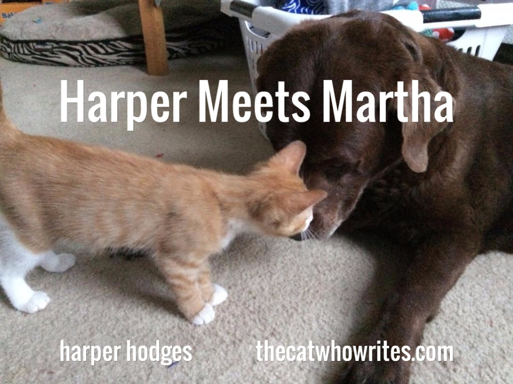harper meets martha